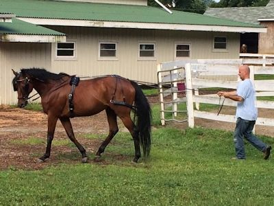 training quarter horse kosten